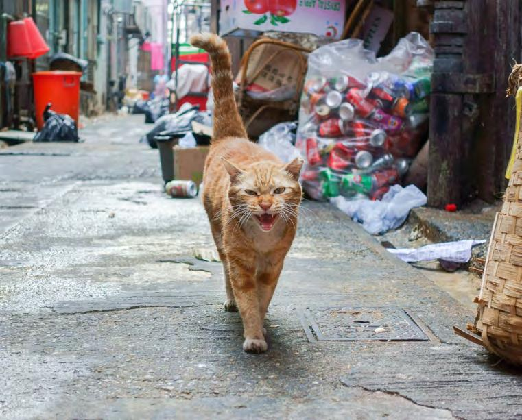 Responsibility of those living alongside street and community cats To look out for the welfare of neutered community cats by feeding and providing shelter, and to collaborate with efforts by local