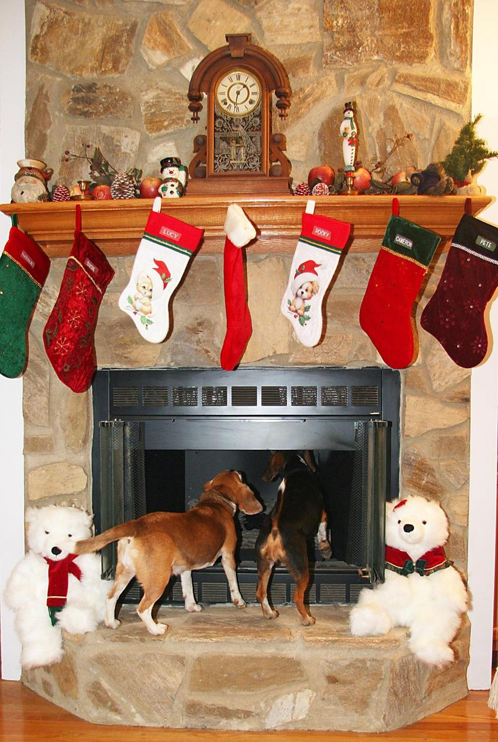 PAUSE FOR PAWS Winter 2013 Volume 6 Issue 1 A lot of dogs have bigger problems than just waiting for Santa to come.