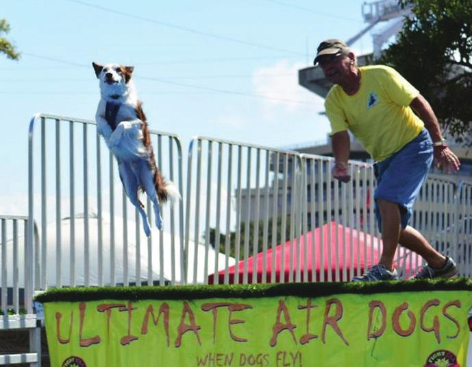 ULTIMATE AIR DOGS COMPETITION Presented