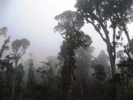 Educational workshops with villagers were conducted in the Cuchumatanes region in order to increase the public awareness about the importance of the conservation of the cloud forest this species