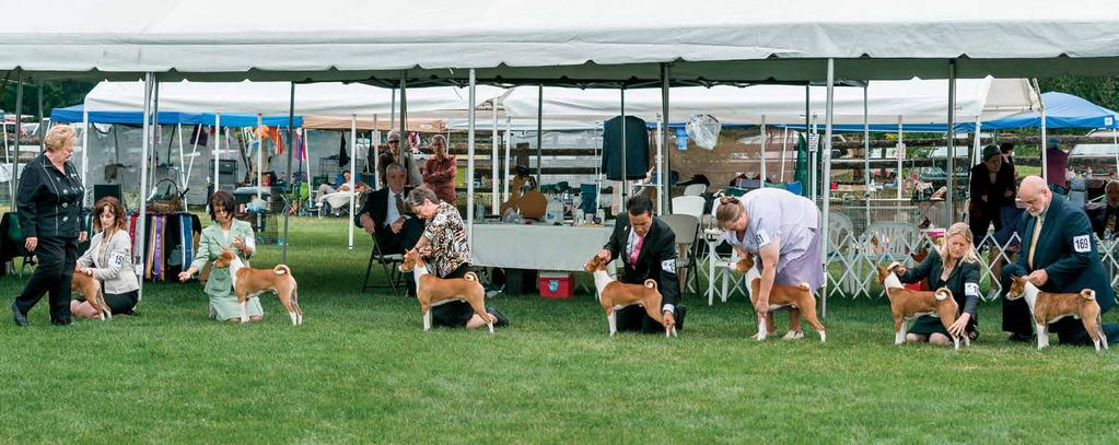Judging the Basenji George Woodard 5star road trip to Nationals by Doreen Duffin Makuba Basenjis Victoria The Basenji is a very ancient breed which dates back to the days of the Pharaohs.