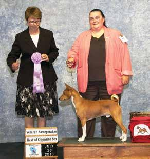 Update your web site so you can be the resource for Basenji breed information.