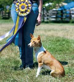 woodard Saturday July 13 AKC Lure Coursing Judges Vern Staack and Avery McLeod had an entry of 37 Basenjis in the trial (large enough for split stakes in both Open and Specials) and eight Junior