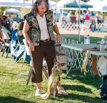 High Scoring Basenji in the Regular Classes: FC MACH Eldorado s Y s African Sinbaje CDX SC RE FCH GRC with owner-handler Linda Siekert from the Utility A Class and a score of 187.