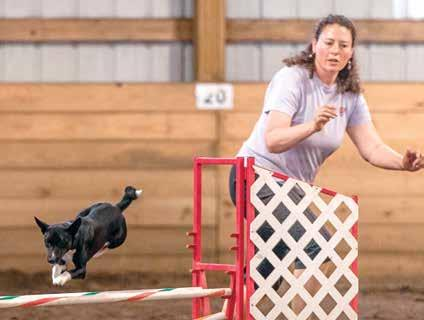 Contender CD, RA, JC, AX, MXJ July 15 Basenji Qualifiers from All-Breed Agility Trial The BCOA National Agility trial was a little different this year we invited all breeds to join us but limited the