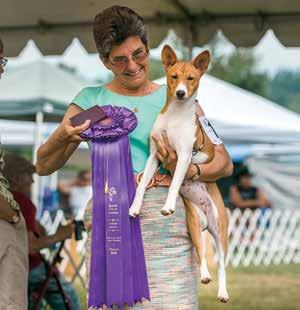 handled by Pat Cembura. Judy liked him so much she gave him Best of Winners in the Best of Breed competition.