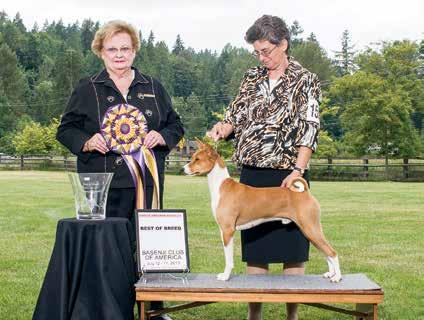 July 17 Conformation, Best of Breed The photo on page 97 suggests the challenge Judge Webb faced in selecting the winners and making her placements.