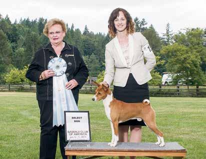 Edition SC Owner-handler Natalie Scherwin Select Bitch GCh Zindika s Got Moxy Breeder-owner-handler Cecily Rappe Awards of Merit (Catalog Order) CH Atarasi