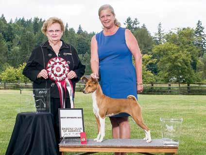 Santa Baby MC GRC CGC LCMII VB Handler Michael Work CH Akuaba N Eldorado Bungle in the Jungle Breeder-owner-handler Pam Geoffroy GCH Akuaba N Eldorado Betcha