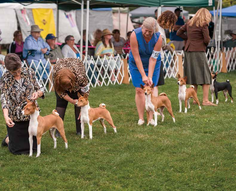 CH Laurel s Simply Shocking Sabrina Breeder-owner-handler Laura Mae Hesse July 17 Conformation multiple entry non-regular classes Stud Dog Winner Taji s