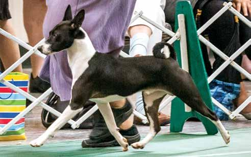 Meet all of Smoky s titled kids Am Can & UKC CH Timar's On The Dark Side Am GCH Akuaba N Eldorado Speed of Light Group Winner and 2012 National Specialty Select Bitch Our recent National Specialty