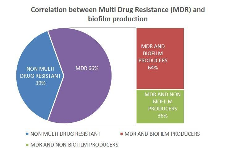 Figure.2 Association between biofilm producers and MDR The present study showed out of the 41 strains, E. coli was the most frequently isolated pathogen (51.2%) followed by Klebsiella pneumonia (24.