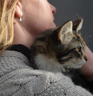 adopters, spending time with cats, helping in the administration office and thrift store