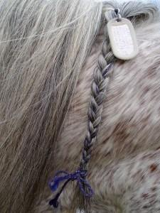 Horses can be permanently identified with microchips or tattoos. Keep ownership records with you as you evacuate.