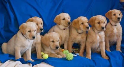 We have all enjoyed spending time with the newest batch of puppies in the last few weeks!
