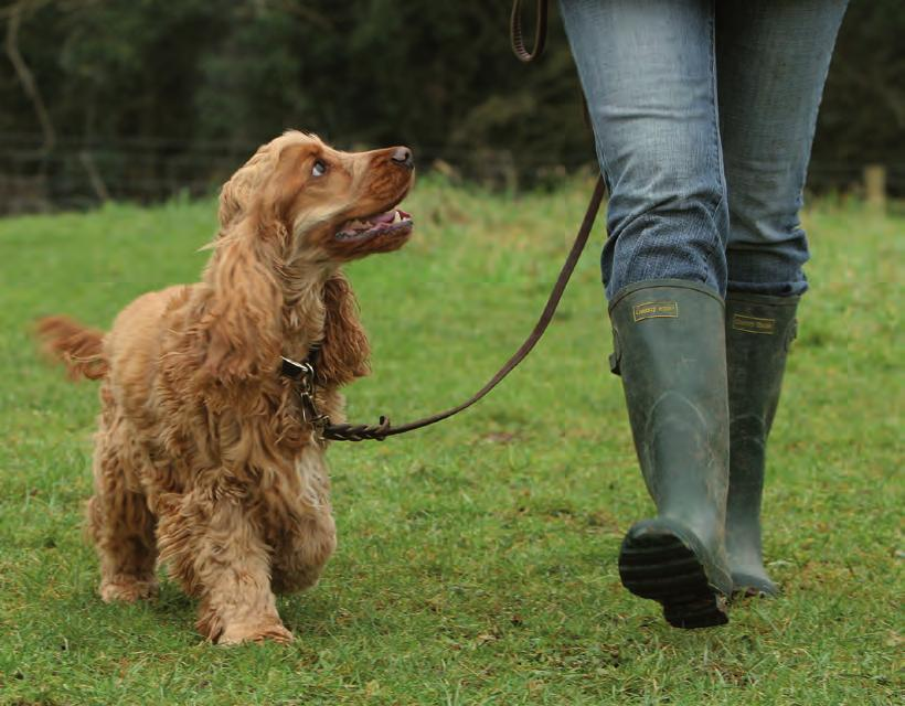 If you want to let your dog have more freedom, then purchase an extendable lead which offers a good compromise between restraint and free exercise. make sure your dog has some form of identification.