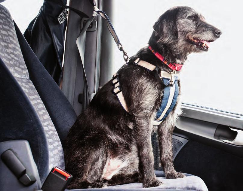 Never transport your dog in the boot, loose in the front foot well of the car or in the removal van On a long journey it is wise to stop and offer your dog water or a chance to exercise If it is a
