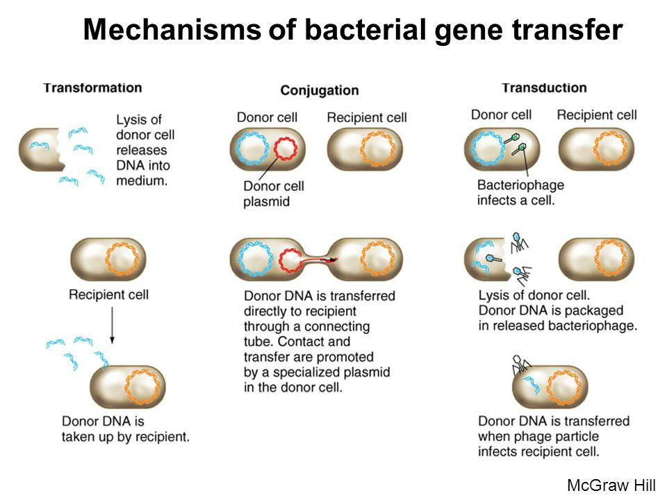 Mechanism of DNA Transfer Conjugation: Main mechanism for spread of resistance