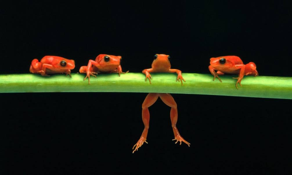 Frogs and Toads Traits of frogs and