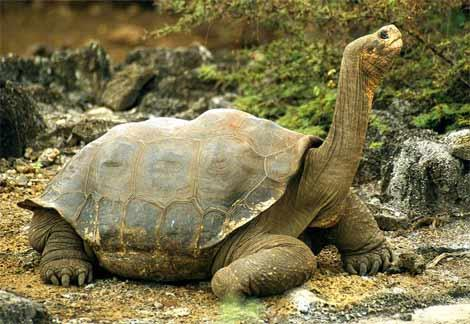 Turtles and Tortoises Traits of