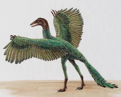 The oldest fossil of a bird-like animal is