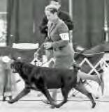 Top 10 Bitches 1. GCH-S BAAR s Oh! Que Sera Sera BN RN HT Patricia R Opperman, Ann K Callahan & Kathryn M Howse 678 2. ARC Select1 GCH-S Antren s Just Like That * Anthony & Karen DiCicco 568 3.