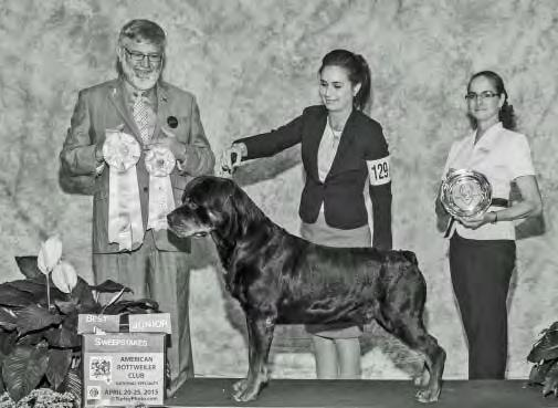 Junior In Veteran Sweepstakes Gold GCH Redfield s