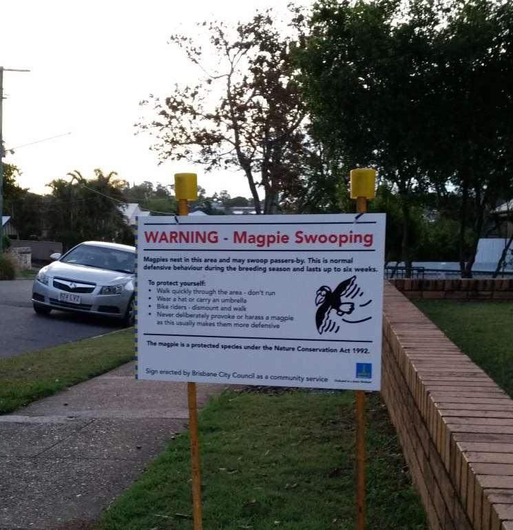 Figure 37 Temporary magpie swooping warning sign placed on the street where I live by the Brisbane City Council (photo taken 26 October 2015) Due to the potential seriousness of their aggression,