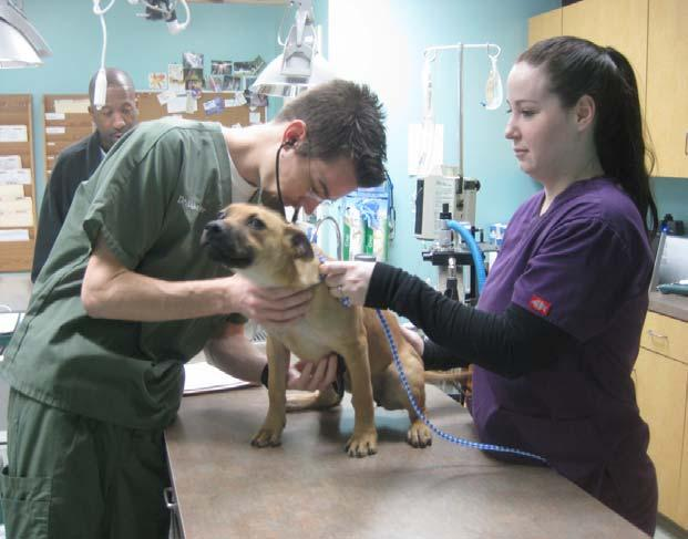 Spay/Neuter Project In August of 2012, CAH was awarded a