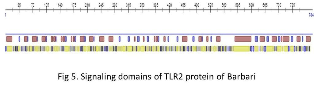The goat TLR2 protein sequence was analyzed for its homology by ranking with the closest template based protein model (Fig.