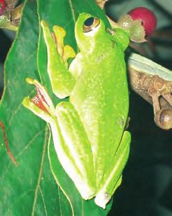 Herpetofauna in Karnataka and
