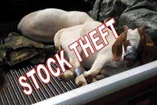Many of the respective role players in the livestock production sector contribute directly to the high incidence of stock theft by ignoring the legal requirements as set out in the Animal