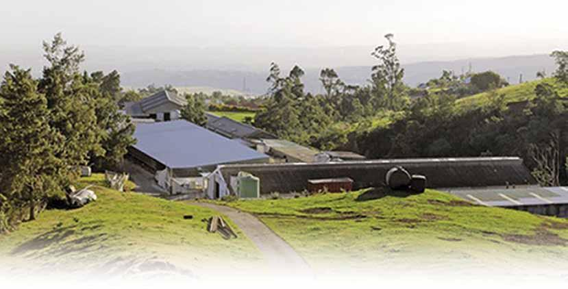 Successful meat production on Réunion Island - Lloyd Phillips Space is limited on the island of Réunion. Farms are small, and farming is intensive and diversified.