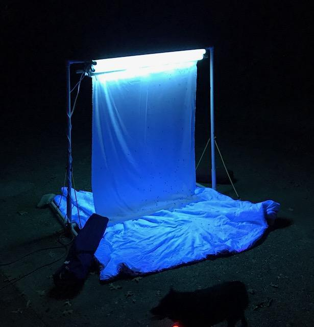 2.0 COLLECTING Arriving late on August 18 th, Light trap was set up in front of the quarter using black light (Figure 2-1) and white sheets to attract praying mantis.