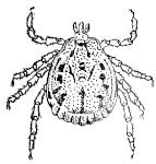 Also, if mites are taken internally by eating infested food, they