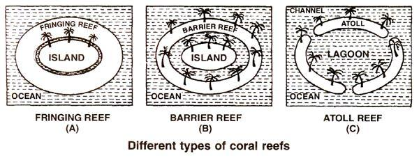 inhabitant, chiefly medreporarian corals. Coral reefs form stable marine ecosystems.