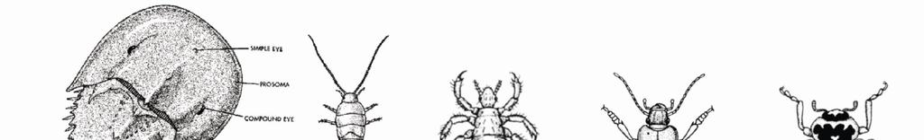 Class-3 : Diplopoda Body is divisible into head, thorax and abdomen. There is a single pair of antennae and ocelli.