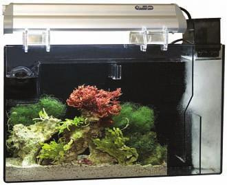 Provides a haven for injured fish or corals to regenerate damaged tissue without the need for a separate quarantine tank.