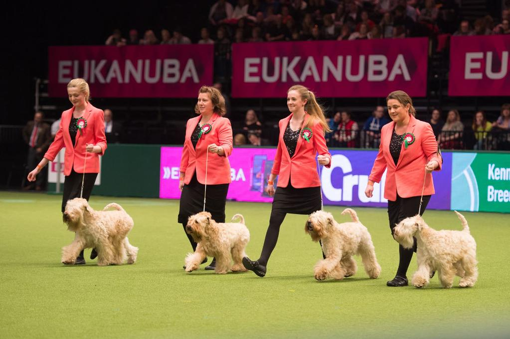 MARCH 2018 2 NEWS from the Kennel Club Competitions galore at Crufts Continued from page 1 include team and individual rounds.