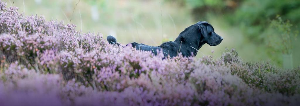 MARCH 2018 20 Introducing The Emblehope & Burngrange Estate Northumberland A Centre of Excellence for Working Dogs This beautiful moorland estate stretches to some 7,550 acres and is ideal for walked