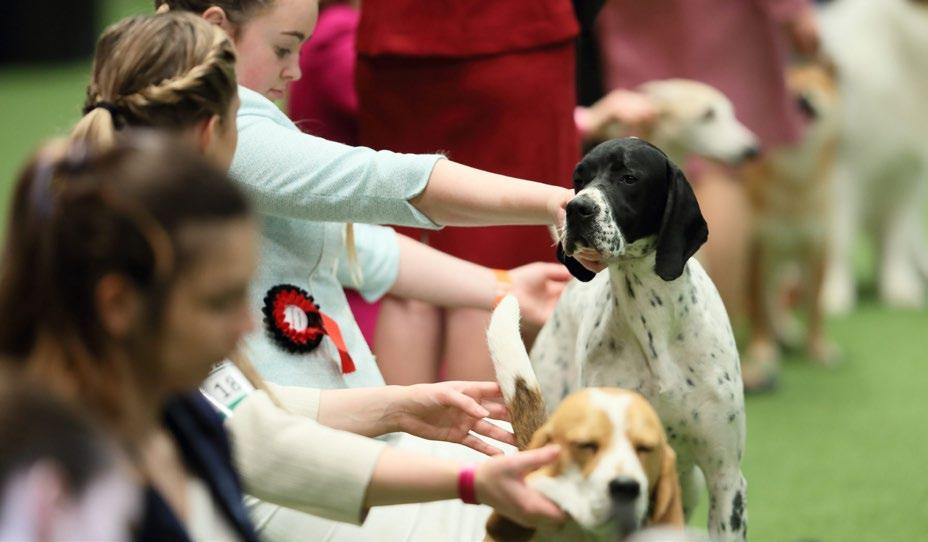 MARCH 2018 3 The Kennel Club NEWS from the Kennel Club Competitions galore at Crufts Continued from page 2 Junior Handling The International Junior Handling final takes place on the Saturday and will