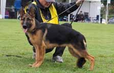 Berghofer Breeder: Miss V E McGinty Placing 3 BERNLOCH LLADRO 15/12/2016 Sire: *Ch.
