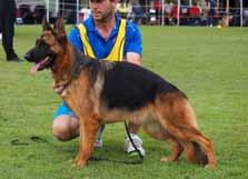 STOCK COAT bitch classes Placing 5 ALIMANDA SHE S THE ONE Placing 7 KAYGARR BIBBA Placing 9 ASTASIA GAMBA 21/05/2016 Sire: *Juwika Destroyer HD-ED (Imp Den) Dam: Bruangie Something To Follow AZ