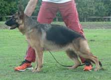 Correct angulations. Very powerful movement. Presentation should be better. Placing 9 ASTASIA DARYA 16/05/2016 Sire: *Ch.