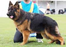 LONG STOCK COAT dog classes Placing 4 RIMERINI EXPECT THE UNEXPECTED Placing 6 EROICA GOLIATH Placing 8 KINGLAND YES MR COOPER 09/10/16 Sire: *Astasia Paca AZ Dam: Grand Rimerini Always And Forever