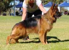 LONG STOCK COAT dog classes LONG STOCK COAT INTERMEDIATE DOG 5 Graded Very Good Placing 1 *HASENWAY MAJOR TOM (IID) AZ Placing 3 EROICA EROTIC ERIK AZ Placing 5 REICHKAISER FULL SPEED AHEAD