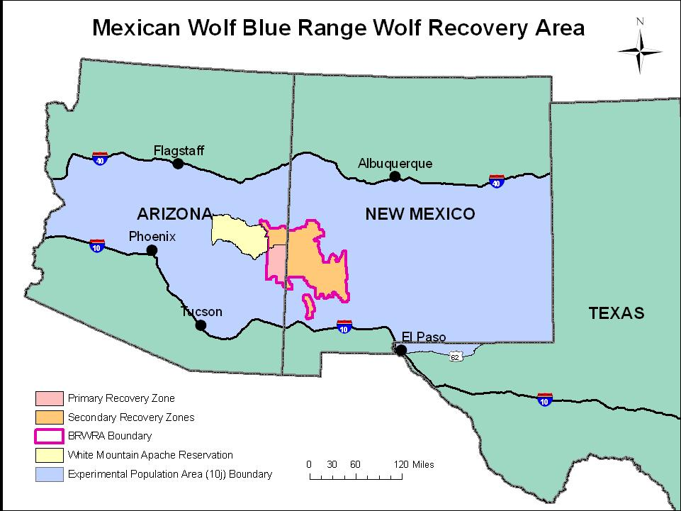 Statement of the Problem Mexican Gray Wolves are an endangered species.