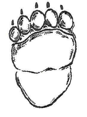 This is the hind foot track of a black bear. This big bear is 7 feet long and weighs 600 pounds!