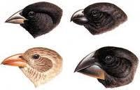different shaped beaks depending on which