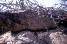 Orientation of rock crevices inhabited by Pancake tortoises a) Horizontally inclined crevice (Ndulani area, Kitui district) b) Diagonally inclined crevice (Namunyak conservancy area, Samburu